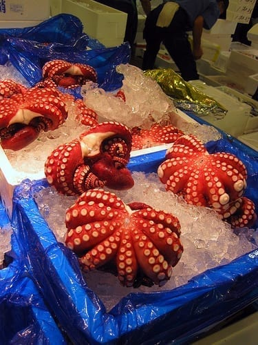 Octopus at the Tsujiki Fish Market - My First 24 Hours in Japan